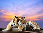 Modern HD print oil painting art on canvas (No stretch) Home Decor Tiger HXT212