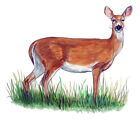 White Tail Tailed Whitetail Deer Doe Hunting Decal Sticker Camp Decor Art Gift