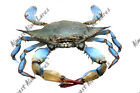 High Quality Vinyl Fish Decal Blue Crab