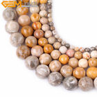 Natural Gemstone Chrysanthemum Ammonit Coral Fossil Beads For Jewelry Making 15""