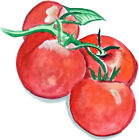 Tomatoes Vegetables Almost Alive Vinyl Decal - Auto Car Truck RV Cell Cup Boat