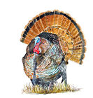 Wild Turkey Bird Sticker Decal Glass Window Visor Bumper Mirror Body ATV Gift