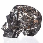 "4.96"" Natural New Shell Fossil Carved Smiling Skull,Collectibles#22D59"
