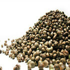 Carp force premium hempseed quality hemp seed for fishing 100g bag