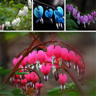 Various Hydrangea Orchid Ideal Garden Potted Seeds Flower Plant Ornament Decor e