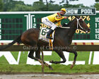 "Rachel Alexandra 2009 Haskell Invitational 2 Photo 8"" x 10 - 24"" x 30"""