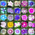 Most beautiful MORNING GLORY mixture IPOMOEA rare varieties 1 or 2 pound seeds