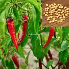 20/50 Particle Vegetable Pepper Chili Seeds Potted Garden Plants DZ88