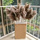 15pcs Natural Dried Pampas Grass Reed Flower Bunch Home Wedding Bunch Decor