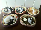 CAT TOY KIDS CHILDREN KITTENS IN BASKET MIAOW IF BUTTON PRESSED STOCKING FILLER