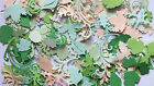 100 ASS LEAVES SUMMER COLOURS CARDS SCRAP BOOKING CHRISTMAS