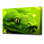 LARGE GREEN SNAKES HEAD CANVAS PRINT EZ1283