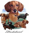 Dachshund Lawn T Shirt Pick Your Size Youth Medium to 6 X Large image