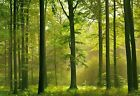New Autumn Forest 8 Sheet Woodland Wall Mural Giant Wall Mural