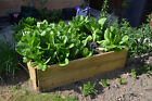 Rectangle Timber Raised Bed - 1 Tier - Ideal for flower bed,herb planter & more