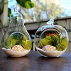 Fruit Shape Glass Plant Flower Vase Terrarium Container Home Party Wedding Decor