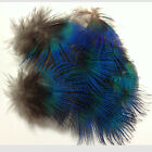 Wholesale 10Pcs DIY Beautiful Peacock Plumage Feathers 4-7cm / 2-3inches