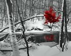 Black White Red Modern Snowy Creek Home Decor Wall Art Matted Picture