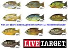 Внешний вид - Live Target Sunfish Bluegill Hollow Body Topwater Pick any SFH Color Size Lure