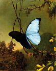 blue morpho butterfly reproduction - Blue Morpho Butterfly by M. Heade. Fine Art Repro. Made in U.S.A Giclee Prints