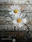 Yellow Rustic Modern Daisy Flowers Bubbles Bathroom, Bedroom Home Decor Picture