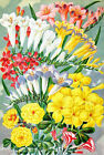 Freesia Flowers Seed Packet Quilt Block Multi Szs FrEE ShiP WoRld WiDE (S129