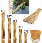 2-6ft Heavy Duty Bamboo Garden Canes Strong Thick Quality Plant Support Sticks