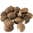22.5lb Bag of Tagua Nuts from Ecuador , Fair Trade, Craft & Jewelry Material