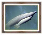 Framed Manatee and Calf Wildlife Photo to Canvas Painting Reproduction Art Print