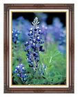 Framed Texas Bluebonnet Flower Photo on Canvas Painting Reproduction Art Print