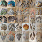 Wholesale all kinds of different beautiful natural pheasant feather Free shippin