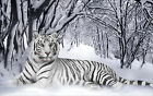 White Snow Tiger Animal Winter Forest Canvas Pictures Modern Home Wall Art Print