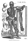 ML41 Vintage Medical Anatomical Human Back Muscles Da Cortona Poster A2/A3/A4