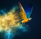 Modern Print oil painting on canvas wall art macaw parrot bird psychedelic HXT65
