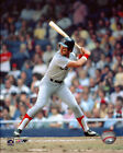 Fred Lynn Boston Red Sox MLB Action Photo HD205 (Select Size)