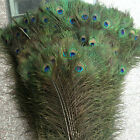 Hot Sale 10PCS/50PCS Natural Beautiful Peacock Feathers (approx. 10-12 inches)