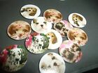 Pre Cut One Inch Bottle Cap Images Dogs Puppies Free Shipping