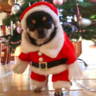 Christmas Dog Pet Puppy Outdoor Costume Hoodie Suits Cosplay Warm Apparel Coat