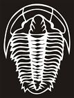 TRILOBITE Decal Sticker Prehistoric Dinosaur Window Car Truck (4 inch/10.6 cm)