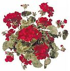 Red Geranium Flowers Select-A-Size Waterslide Ceramic Decals Bx  image