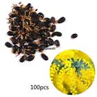 New Nice Adorable Flower Fragrant Blooms Acacia Seeds EHE8