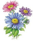 Flower of the Month September Asters Select-A-Size Ceramic Waterslide Decals Bx image