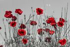 Unframed Photo Canvas Print Poster Picture Red Poppies Floral Remembrance Flower