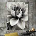 Canvas Painting Prints No Frame Nordic Abstract Flower In Blossom Wall Pictures for sale  Shipping to Canada
