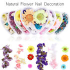 Nail Art Decorations Preserved Fresh Flower Nail Colorful Dried Flower Nail Tool