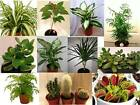 Indoor House Plant Collection - Established for Office - Home - Conservatories