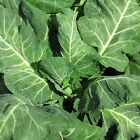 Collard Seed: Vates Collards Fresh Seed  FREE Shipping