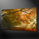 SUN RAY MISTY FOREST PREMIUM CANVAS PRINT PICTURE WALL ART DESIGN FREE UK P&P