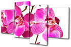 Floral Orchids Flowers MULTI CANVAS WALL ART Picture Print VA