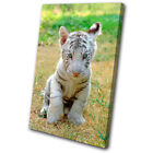 Animals Baby White Tiger SINGLE CANVAS WALL ART Picture Print VA